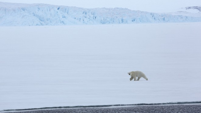Expeditionsresor Svalbard 2015 webb (15)